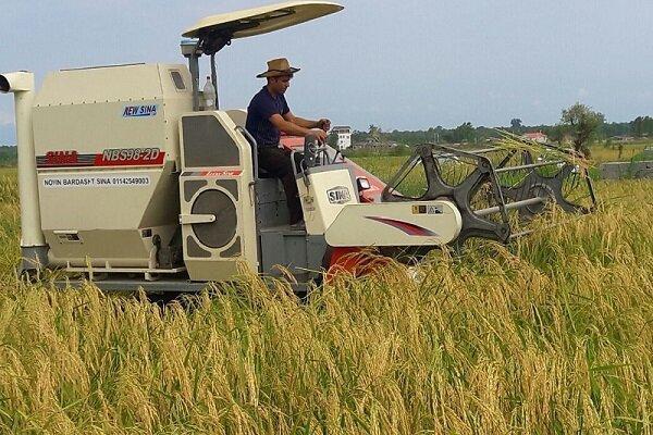 شروع برداشت برنج در گیلان