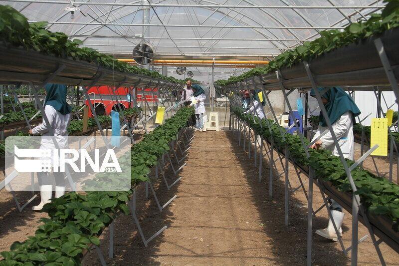 خبرنگاران استان اصفهان رتبه دوم احداث گلخانه را در کشور دارد